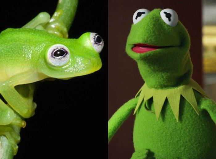 Kermit y su hermano
