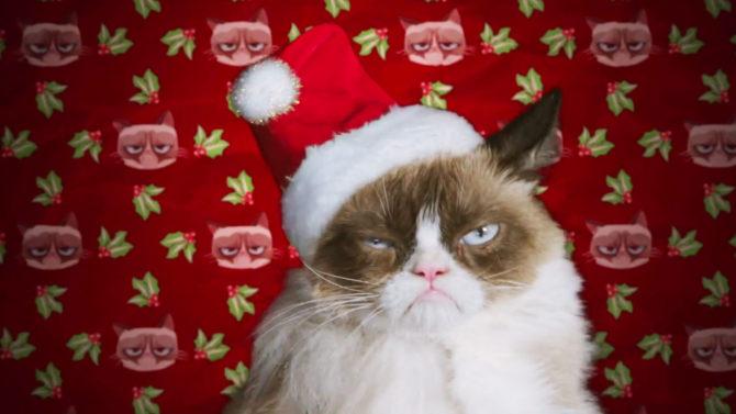 Mira el trailer de 'Grumpy Cat'