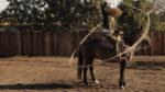 Fuimos al Rancho de 'Los Cowboys'-
