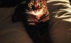 Día nacional del gato