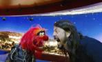 Dave Grohl se enfrenta a Animal