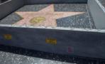 Donald Trump estrella